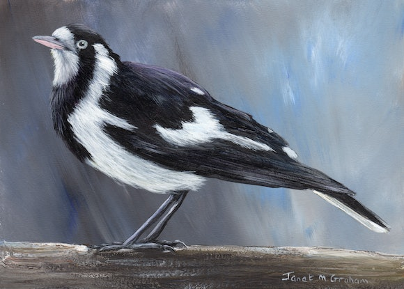 (CreativeWork) Magpie Lark (Peewee) by Janet Graham. Acrylic Paint. Shop online at Bluethumb.