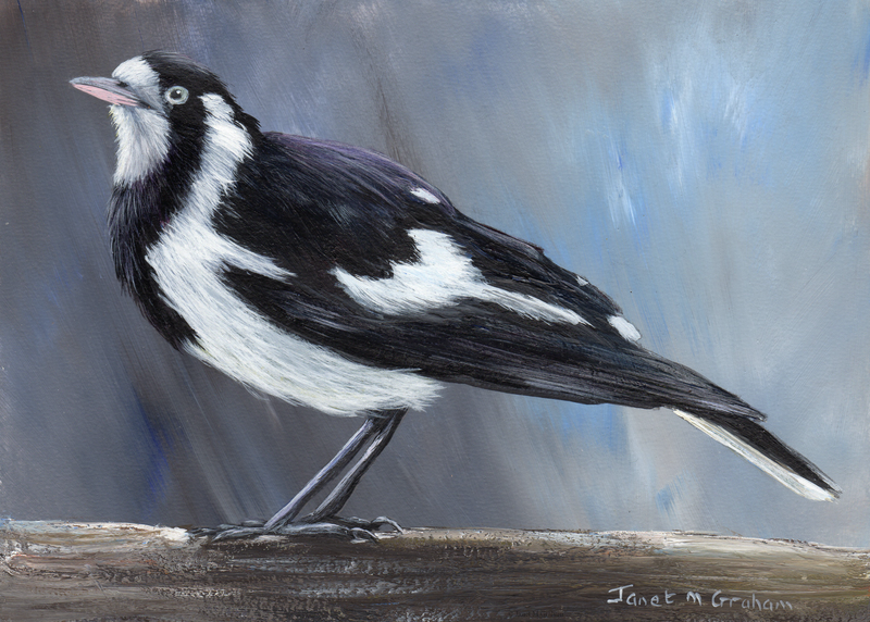 (CreativeWork) Magpie Lark (Peewee) by Janet Graham. acrylic-painting. Shop online at Bluethumb.
