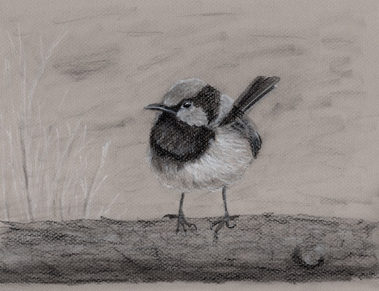 (CreativeWork) Sitting Pretty in Black and White by Kathryn Price. Drawings. Shop online at Bluethumb.