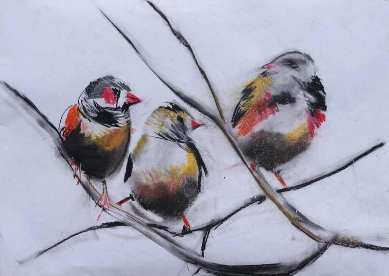 (CreativeWork) Finches by Roland Weight. Drawings. Shop online at Bluethumb.