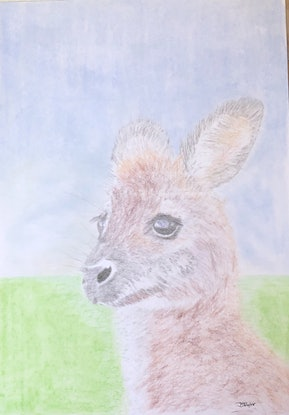 (CreativeWork) Young Wallaby Portrait by Jennifer Taylor. Drawings. Shop online at Bluethumb.
