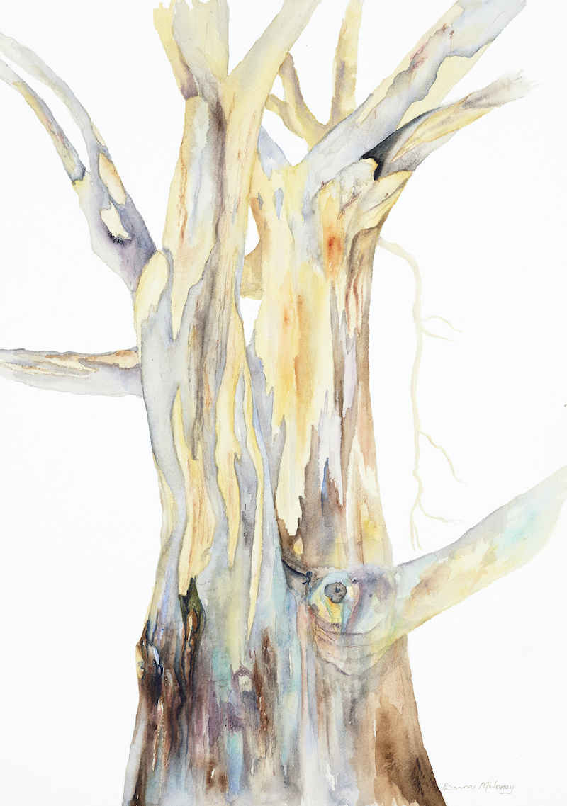 (CreativeWork) Gum Tree  by Donna Maloney. Watercolour Paint. Shop online at Bluethumb.