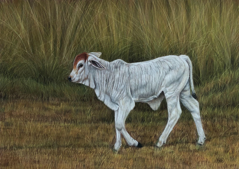 (CreativeWork) Calf in the Grass by Alyce Duhs. Drawings. Shop online at Bluethumb.