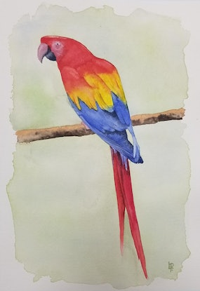 (CreativeWork) Australian Red Macaw by Lucia Pilotto. Watercolour Paint. Shop online at Bluethumb.