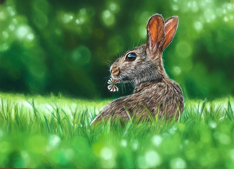 (CreativeWork) Curious Hare by Alyce Duhs. drawing. Shop online at Bluethumb.