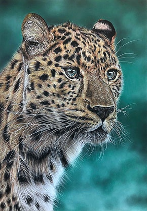 (CreativeWork) Leopard by Alyce Duhs. Drawings. Shop online at Bluethumb.