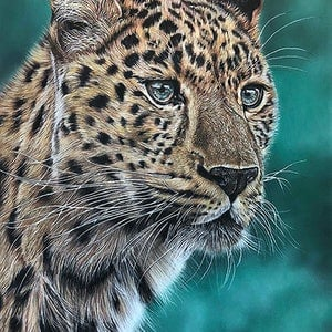 (CreativeWork) Leopard by Alyce Duhs. drawing. Shop online at Bluethumb.