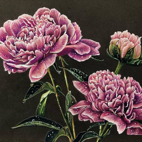 (CreativeWork) Sarah Bernhardt Peonies by Alyce Duhs. Drawings. Shop online at Bluethumb.
