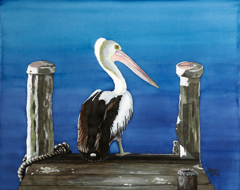 (CreativeWork) 'Pelican Brief' (Limited Edition Signed Giclee Print on Artists Quality PAPER for Framing) A2  Ed. 2 of 150 by Kymberly Stolliday. Print. Shop online at Bluethumb.