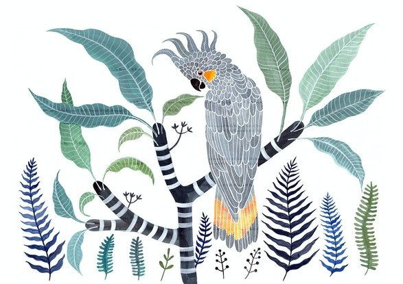 (CreativeWork) Yellow Tailed Grey Cockatoo, Frangipani and Ferns Ed. 45 of 50 by Sally Browne. Print. Shop online at Bluethumb.