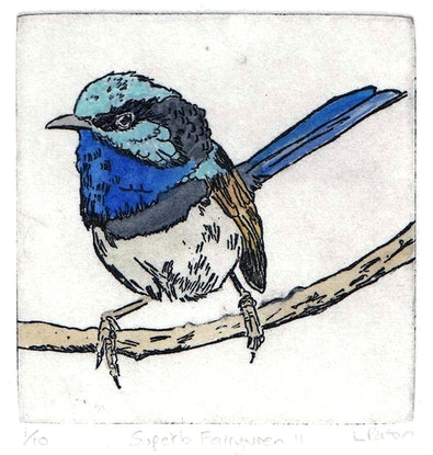 (CreativeWork) Superb Fairywren II Ed. 1 of 10 by Lydie Paton. Print. Shop online at Bluethumb.