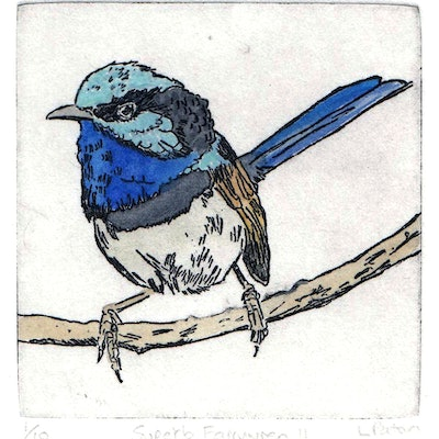 (CreativeWork) Superb Fairywren II Ed. 1 of 10 by Lydie Paton. #<Filter:0x00007fa57c8e0318>. Shop online at Bluethumb.