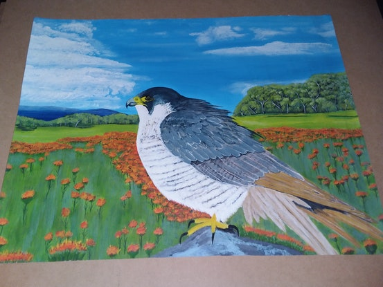 (CreativeWork) Perican Falcon on Rock  by ROBERT Wooldridge. Acrylic Paint. Shop online at Bluethumb.
