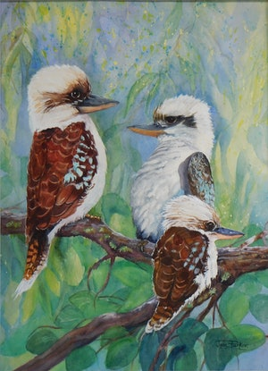 (CreativeWork) The Kookaburra Family by Jean Parker. Watercolour Paint. Shop online at Bluethumb.