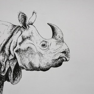 (CreativeWork) Rhinoceros by Lara Louise Karpeljuk. #<Filter:0x0000564b6fc84310>. Shop online at Bluethumb.