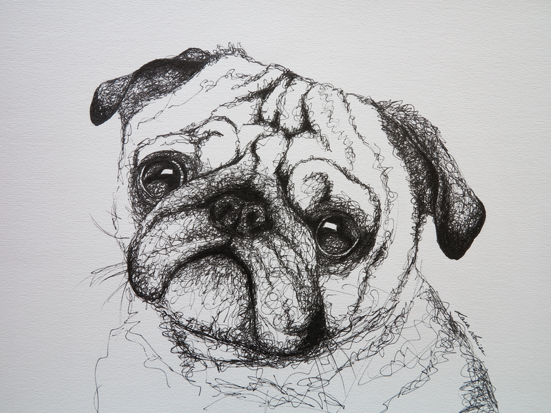 (CreativeWork) Pug Dog by Lara Louise Karpeljuk. Drawings. Shop online at Bluethumb.