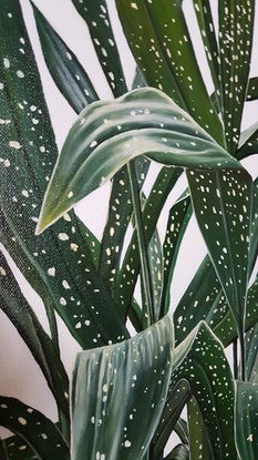 (CreativeWork) the aspidistra by Claire Souter. Oil Paint. Shop online at Bluethumb.