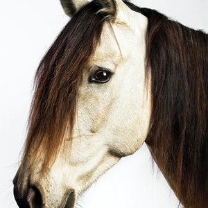 (CreativeWork) JAZZ HORSE Ed. 5 of 10 by GRACE COSTA. Photograph. Shop online at Bluethumb.