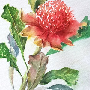 (CreativeWork) Waratah 2 by Anica Amphlett. watercolour. Shop online at Bluethumb.