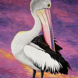 (CreativeWork) Nigel Pelican portrait by Debra Dickson. acrylic-painting. Shop online at Bluethumb.