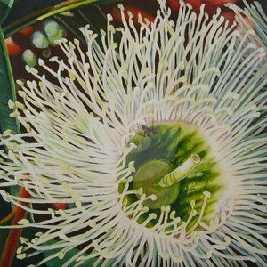 (CreativeWork) Marri Blossom by Delma White. oil-painting. Shop online at Bluethumb.
