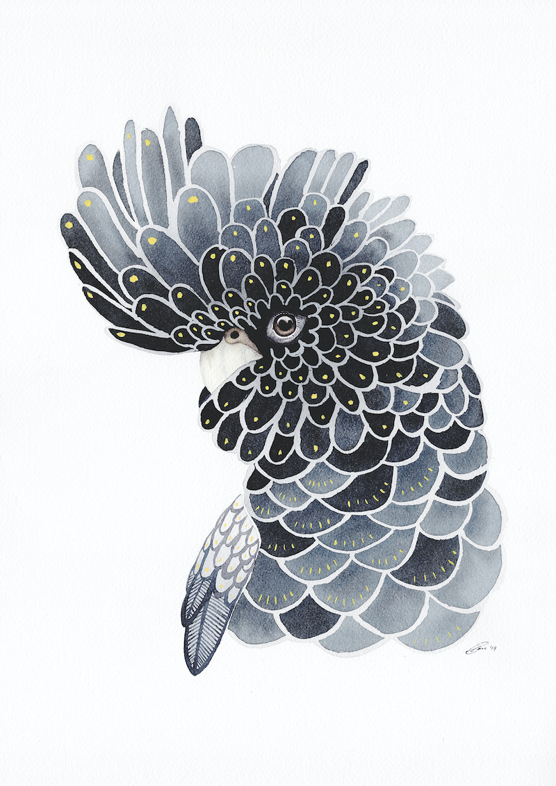 (CreativeWork) Red Tailed Black Cockatoo – Watercolour A3 by Clare McCartney. watercolour. Shop online at Bluethumb.