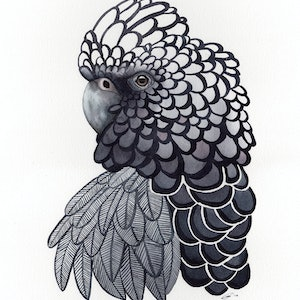 (CreativeWork) Black Cockatoo No.3 – Watercolour A3 by Clare McCartney. watercolour. Shop online at Bluethumb.