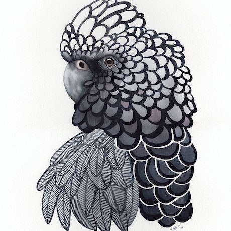 (CreativeWork) Black Cockatoo No.3 – Watercolour A3 by Clare McCartney. Watercolour Paint. Shop online at Bluethumb.