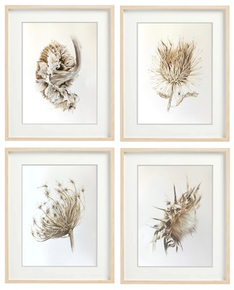 (CreativeWork) Withered by Candace Slager. Drawings. Shop online at Bluethumb.