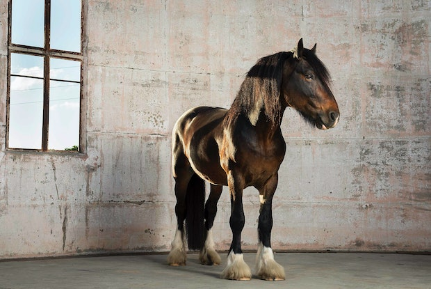 (CreativeWork) JOCK#2 HORSE SERIES Ed. 3 of 10 by GRACE COSTA. Photograph. Shop online at Bluethumb.