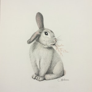 (CreativeWork) Cute Bunny by Catherine Wallace. Drawings. Shop online at Bluethumb.