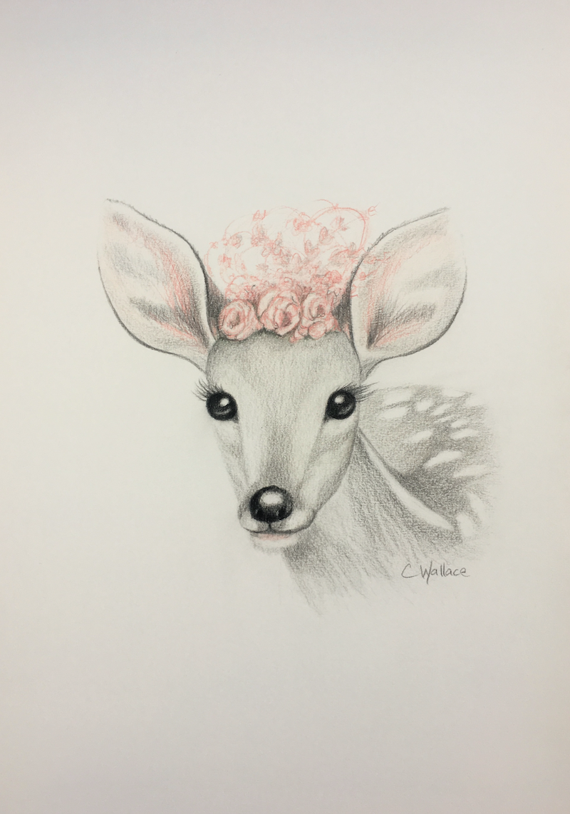 (CreativeWork) Cute Deer by Catherine Wallace. Drawings. Shop online at Bluethumb.