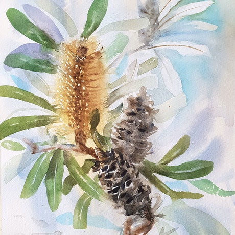 (CreativeWork) Coastal Banksia by Anica Amphlett. Watercolour Paint. Shop online at Bluethumb.