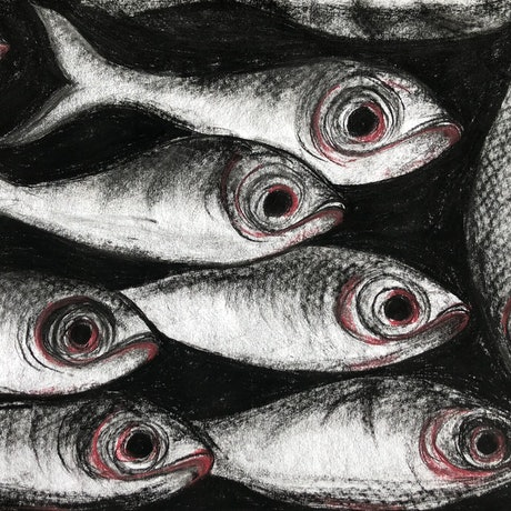 (CreativeWork) The Black Fish Pond Drawing by Max Sabet. Drawings. Shop online at Bluethumb.