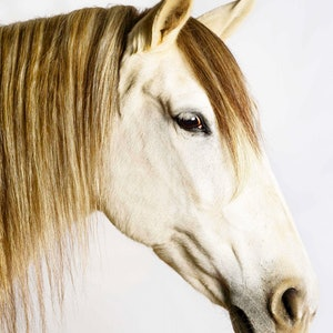 (CreativeWork) BELLEZA HORSE Ed. 2 of 10 by GRACE COSTA. photograph. Shop online at Bluethumb.