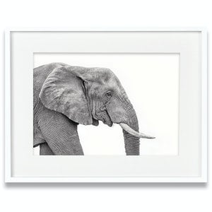 (CreativeWork) African Elephant by Tanya Stollznow. Photograph. Shop online at Bluethumb.