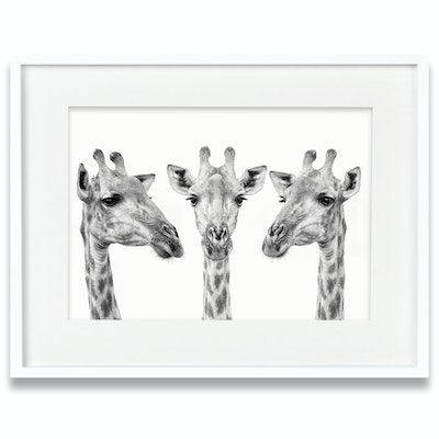 (CreativeWork) Giraffe Trio by Tanya Stollznow. photograph. Shop online at Bluethumb.