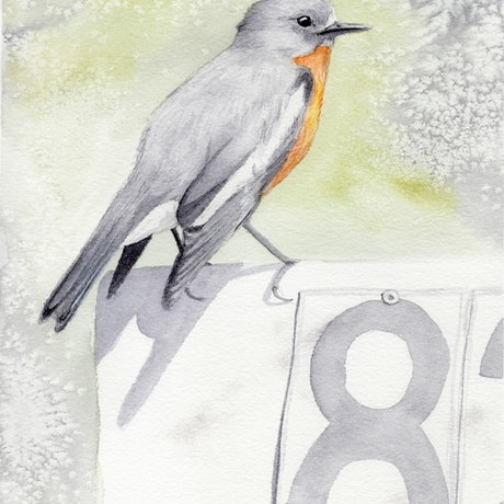 (CreativeWork) Flame Robin by Kathryn Price. Watercolour Paint. Shop online at Bluethumb.