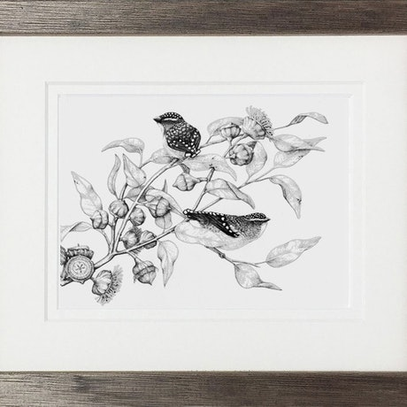 (CreativeWork) Pardalote Pair by Jess Black. Drawing. Shop online at Bluethumb.