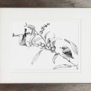 (CreativeWork) Silver-eyed by Jess Black. drawing. Shop online at Bluethumb.