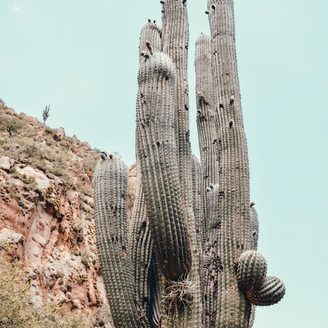 (CreativeWork) Cactus Ed. 1 of 10 by Agus Gago. Photograph. Shop online at Bluethumb.