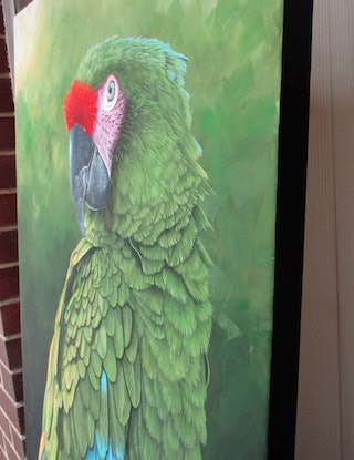 (CreativeWork) Military macaw portrait by Debra Dickson. Acrylic Paint. Shop online at Bluethumb.