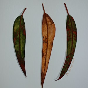 (CreativeWork) Gum Leaves 4 by Bec Bartell. watercolour. Shop online at Bluethumb.