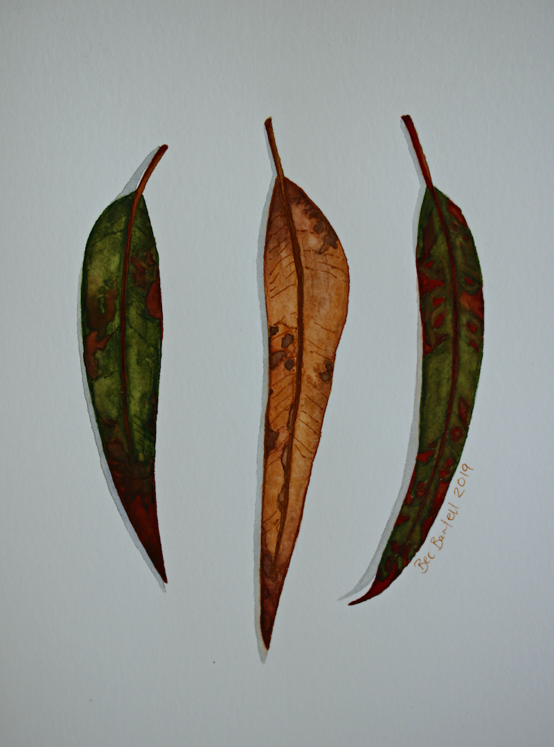 (CreativeWork) Gum Leaves 4 by Bec Bartell. Watercolour Paint. Shop online at Bluethumb.