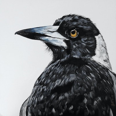 (CreativeWork) The Majesty of the Magpie by Julie Hollis. acrylic-painting. Shop online at Bluethumb.