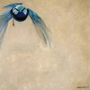 (CreativeWork) Kick out the jams (Splendid Wren) by Al Strangeways. Oil Paint. Shop online at Bluethumb.
