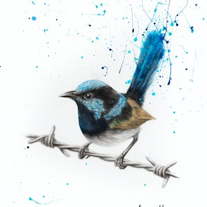 (CreativeWork) Balanced Blue Wren (SOLD) - Commissioned  by Ashvin Harrison. drawing. Shop online at Bluethumb.