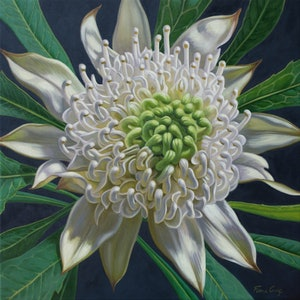 (CreativeWork) White Waratah on Indigo 3 by Fiona Craig. #<Filter:0x00007f1f948d95e0>. Shop online at Bluethumb.