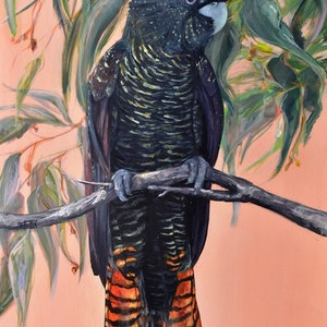 (CreativeWork) Black Cockatoo - Flora and Fauna Series by Rebecca Hill. acrylic-painting. Shop online at Bluethumb.