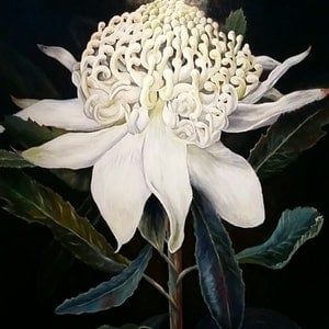 (CreativeWork) 'RARE WHITE WARATAH' -  HUGE,  Statement Piece -  1.4   x 1.12  mt  !!! by Susan Capan. Oil Paint. Shop online at Bluethumb.